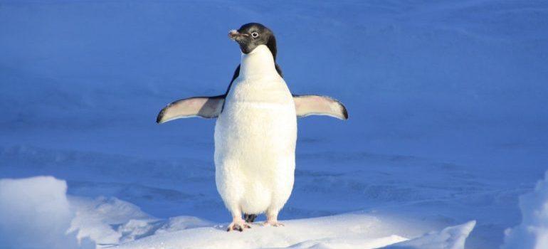 link building vs. link earning - Penguin Update
